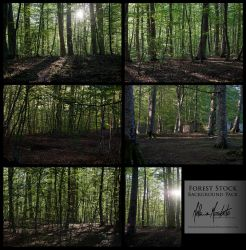 Forest Stock Pack by EvanescentAngel666