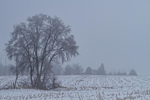 Frozen Branches and Fog by lovethatnixter