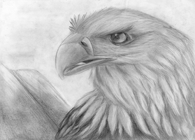 My Eagle by Takas15
