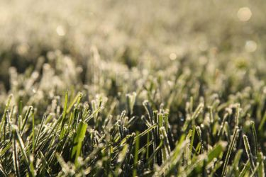 Frosted Grass by lighthousesociety