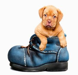 Shoe-Puppy! by Dog-Lovers--Club