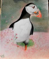 puffin by winstonscreator