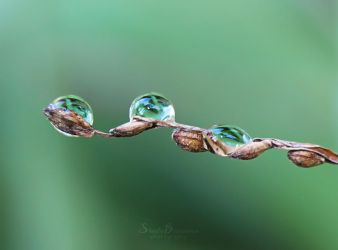 Little of Green by SheilaMBrinson