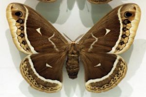 Moth Stock 10 (private use) by Malleni-Stock