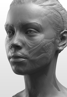 NMA Anatomy Head by NewMastersAcademy