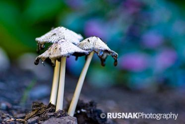 Shrooms by snak