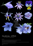 Stock purple flowers by babsartcreations