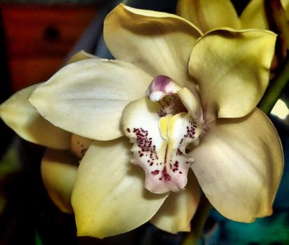 VINTAGE GOLD CYMBIDIUM ORCHID by Peaches1950