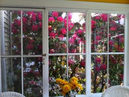 Window of flowers by caspercrafts