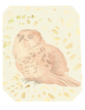 Small Owl Shell by Valhalrion