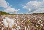 Field of Clouds with a Sky Full of Cotton by RichardNohs