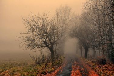 Misty Autumn by tomsumartin