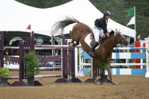 Liver Chestnut Warmblood Grand Prix Jumpers by HorseStockPhotos