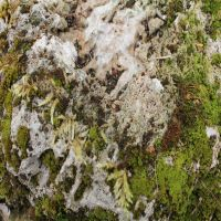 Stone Moss 3 by AngelEowyn