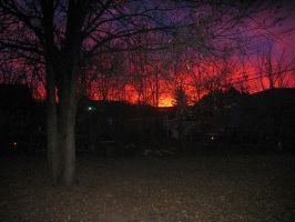 Sunrise Backyard by greyorm
