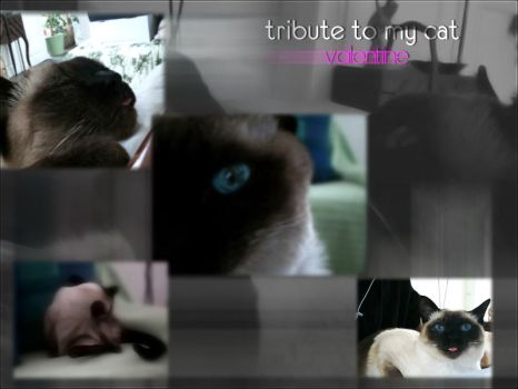 Tribute to my Cat by SD9
