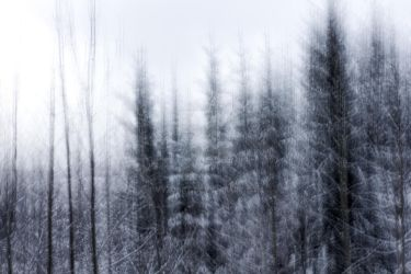 Winter forest abstraction by VyzjArt