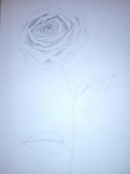 the rose of peace by TherealLevelZ