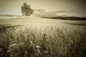 That Hill by McFossey