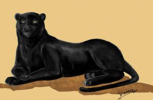 Panther by Silwerra