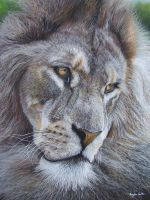 Lion (pastels) by AngelaMaySmith