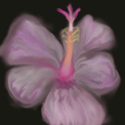 A hibiscus by CrazyCAN