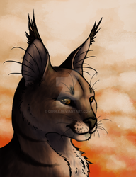 Caracal by Girole