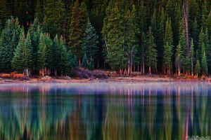 Foggy Forest Reflection by kkart