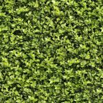 Seamless Hedge Texture by hhh316