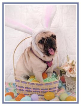 Adobe the Easter Pug yawn by chiachrome