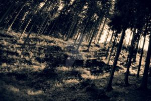 Deep forest of Beskid by VyzjArt