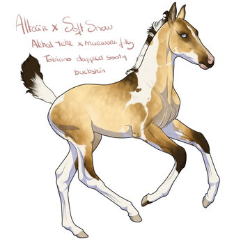 Altair X Soft Snow filly by BH-Stables
