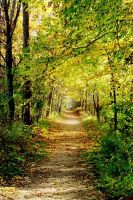 Autumn Path by Fantasies-At-Home