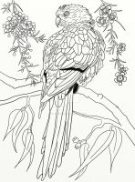 Australian Parrot Coloring Page - Pg 3 by LorraineKelly