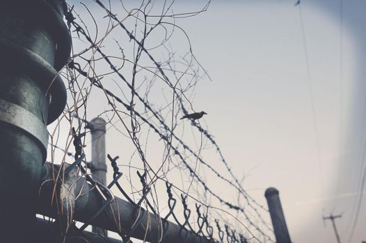 bird on wire fence by knowyourrights