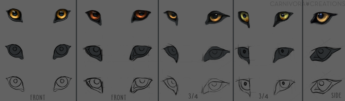 Wolf eye study by Chickenbusiness