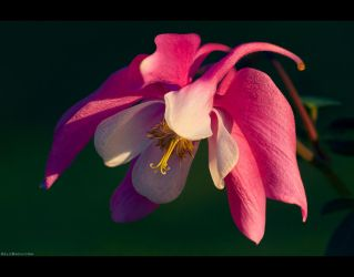 Dressed in Pink and White by KeldBach