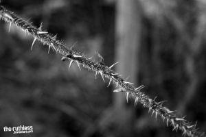 Thorns of the Spring, BW by the-ruthless