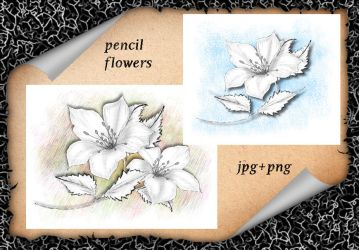 Pencil Flowers by roula33