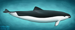 Porpoises with glasses by namu-the-orca