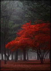 red tree by nayein