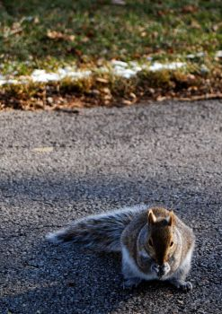Squirrel by xbeautifullyxtragicx