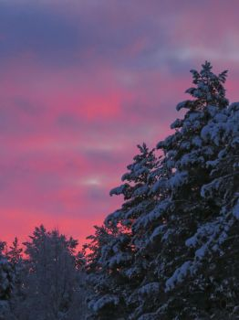 Frosty Christmas Morning by Tessasa
