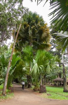 Royal Palm by Quit007