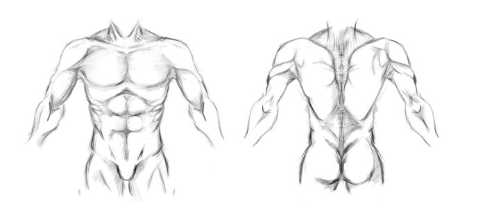 Male Anatomy study by Ahmed-Taher