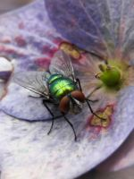 Green Fly by Iris-cup