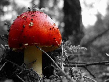 Solitary Toadstool by michalmichal