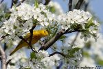 Yellow Tree top beauty by natureguy