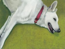 white dog by classina