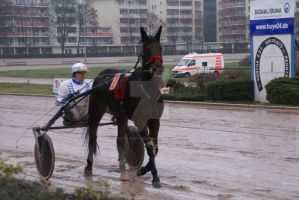 Trot Racing Horse 004 by Hetti-Photograph